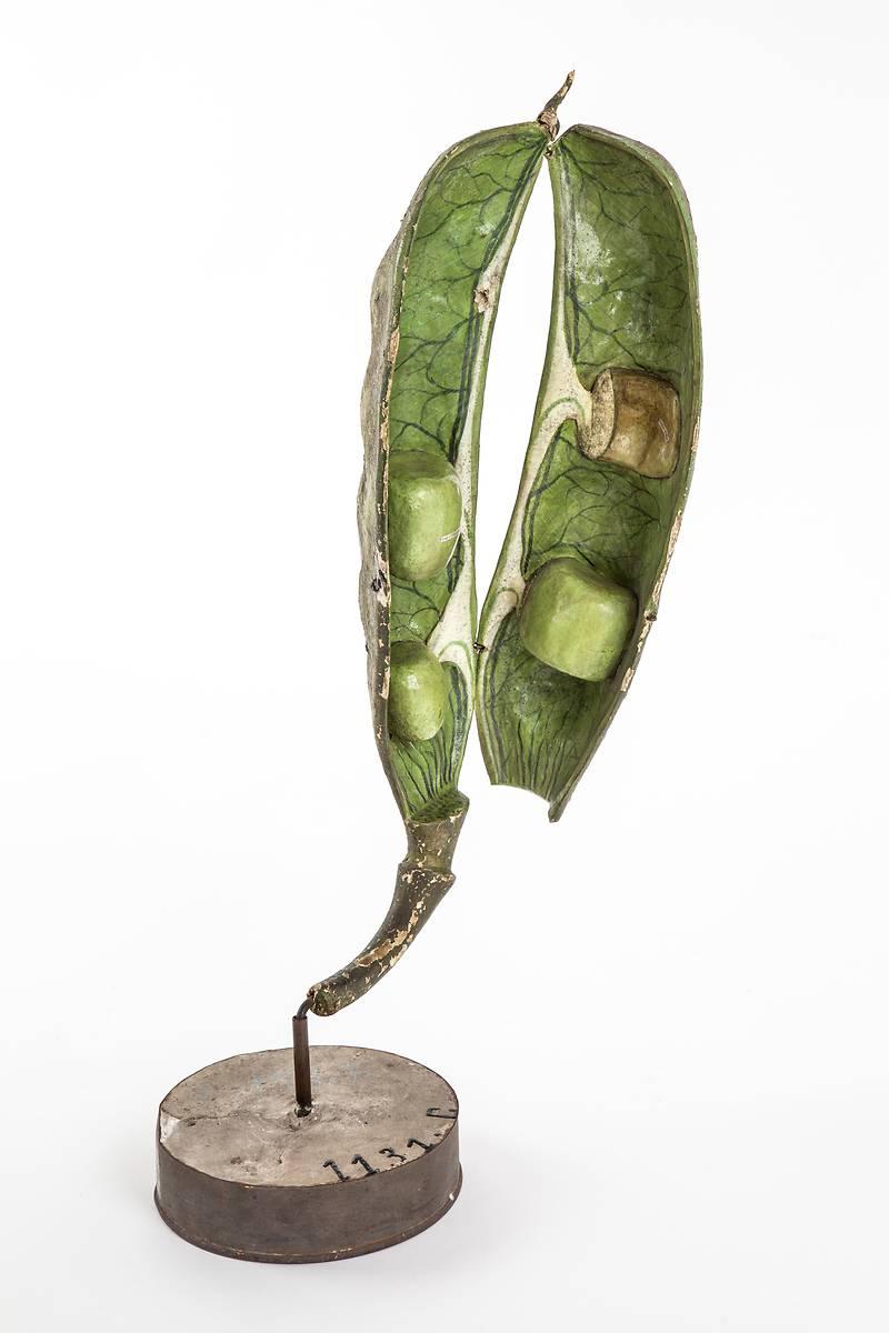 Exposition Belles Plantes Mod Les En Papier M Ch Du Dr