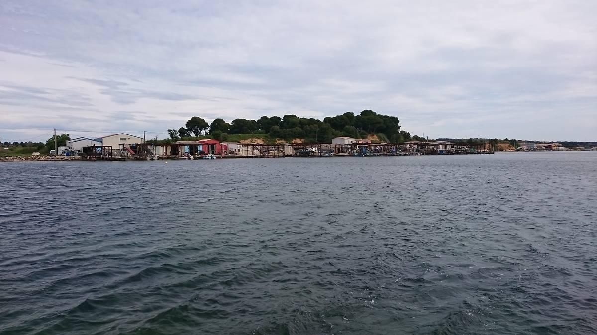 Visite en bateau de l'étang de Thau et des mas conchylicoles