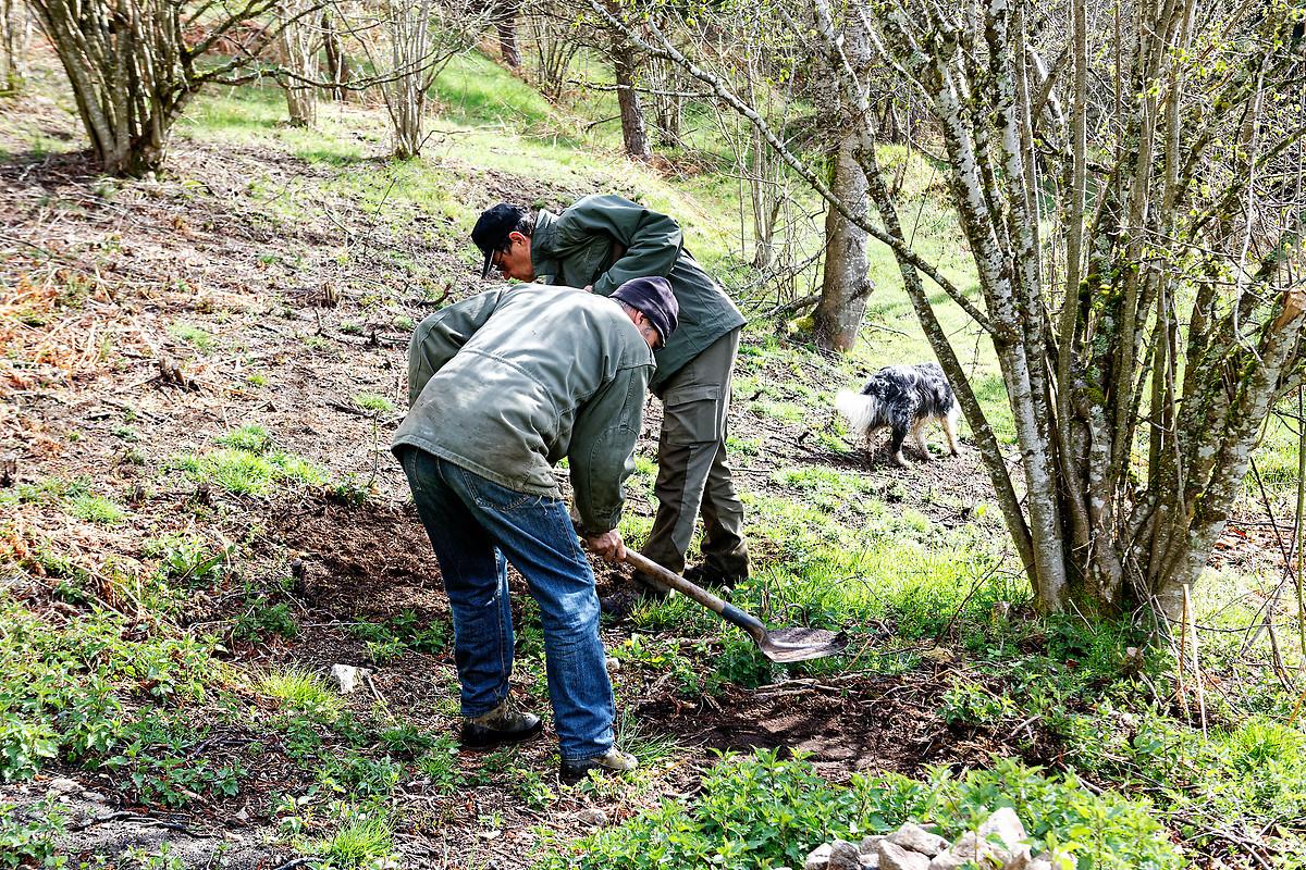 PARC NATUREL RÉGIONAL DU PILAT: RESTAURATION DE LA SAPIA